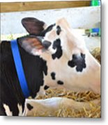 Black And White Cow 2 Metal Print
