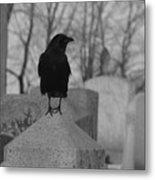 Black And White Crow On Gray Stone Metal Print