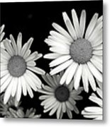 Black And White Daisy 2 Metal Print