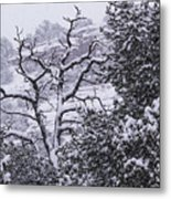 Black And White Day Metal Print