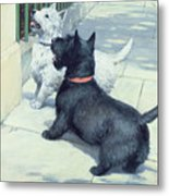 Black And White Dogs Metal Print by Septimus Edwin Scott
