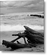 Black And White Driftwood At Whitefish Point Metal Print