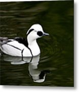 Black And White Duck Metal Print