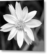 Black And White Metal Print