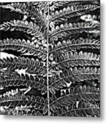 Black And White Fern Metal Print