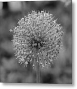 Black And White Flowers Metal Print