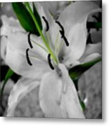 Black And White Life Metal Print by Kip Krause