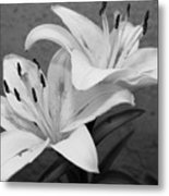 Black And White Lilies 1 Metal Print