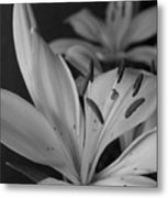 Black And White Lilies 2 Metal Print