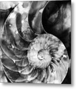 Black And White Nautilus Shell By Sharon Cummings Metal Print