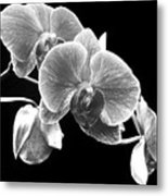 Black And White Orchid Metal Print
