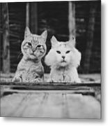Black And White Portrait Of Two Aadorable And Curious Cats Looking Down Through The Window Metal Print