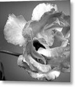 Black And White Rose Metal Print