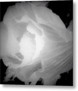 Black And White Rose Of Sharon Metal Print