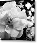 Black And White Rose Of Sharon Metal Print by Eva Thomas