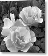Black And White Roses 1 Metal Print