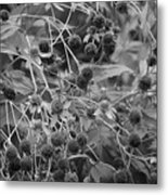 Black And White Sun Flowers  Metal Print