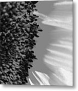 Black And White Sunflower Metal Print