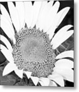 Black And White Sunflower Face Metal Print