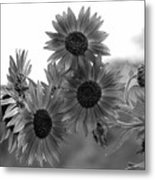 Black And White Sunflowers Metal Print