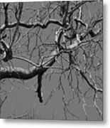 Black And White Tree Branch Metal Print