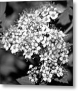 Black And White Twinkle Metal Print