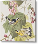 Black And Yellow Warblers Metal Print