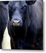 Black Angus Bull Metal Print by Tam Graff