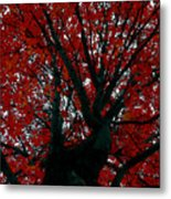 Black Bark Red Tree Metal Print