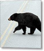 Black Bear Crossing The Road  Metal Print