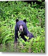 Black Bear Eating His Veggies Metal Print