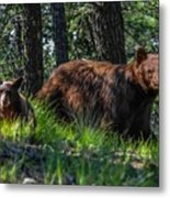 Black Bear - Mother And Baby Metal Print