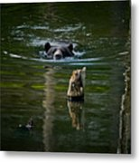 Black Bear Pictures 104 Metal Print