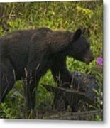 Black Bear-signed-#6549 Metal Print