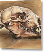 Black Bear Skull Metal Print by Darlene Watters