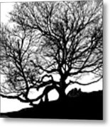 Black Birch Silhouette 2009 07 Metal Print