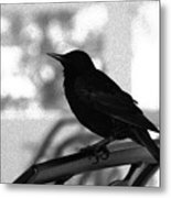 Black Bird Bw Metal Print