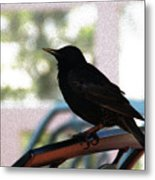 Black Bird Metal Print