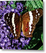Black Butterfly On Heliotrope Metal Print
