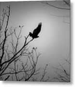 Black Buzzard 1 Metal Print