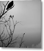 Black Buzzard 7 Metal Print