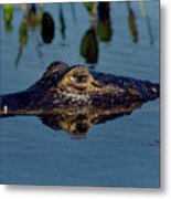 Black Caiman Metal Print