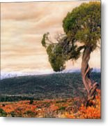 Black Canyon Juniper - Colorado - Autumn Metal Print