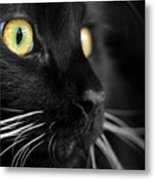 Black Cat 2 Metal Print by Craig Incardone