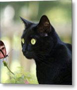Black Cat And Butterfly Metal Print