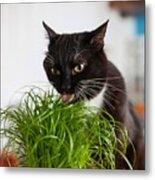 Black Cat Eating Cat Grass Metal Print