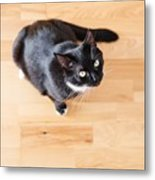 Black Cat Looking At You Metal Print
