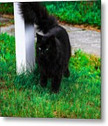 Black Cat Maine Metal Print
