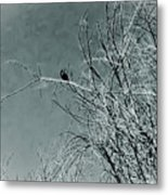 Black Crow White Snow Metal Print