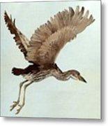 Black Crowned Night Heron 3junenile Roger Bansemer Metal Print